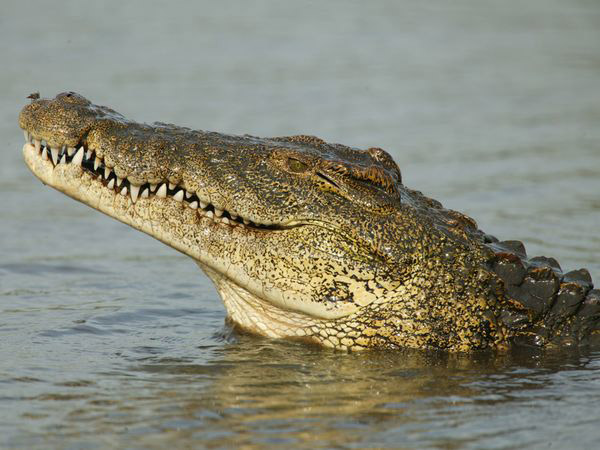 croc4